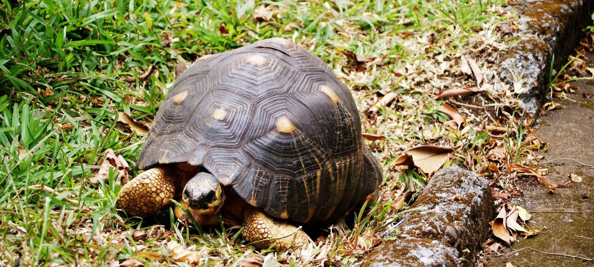 Réunion Island - Africa Wildlife Safaris
