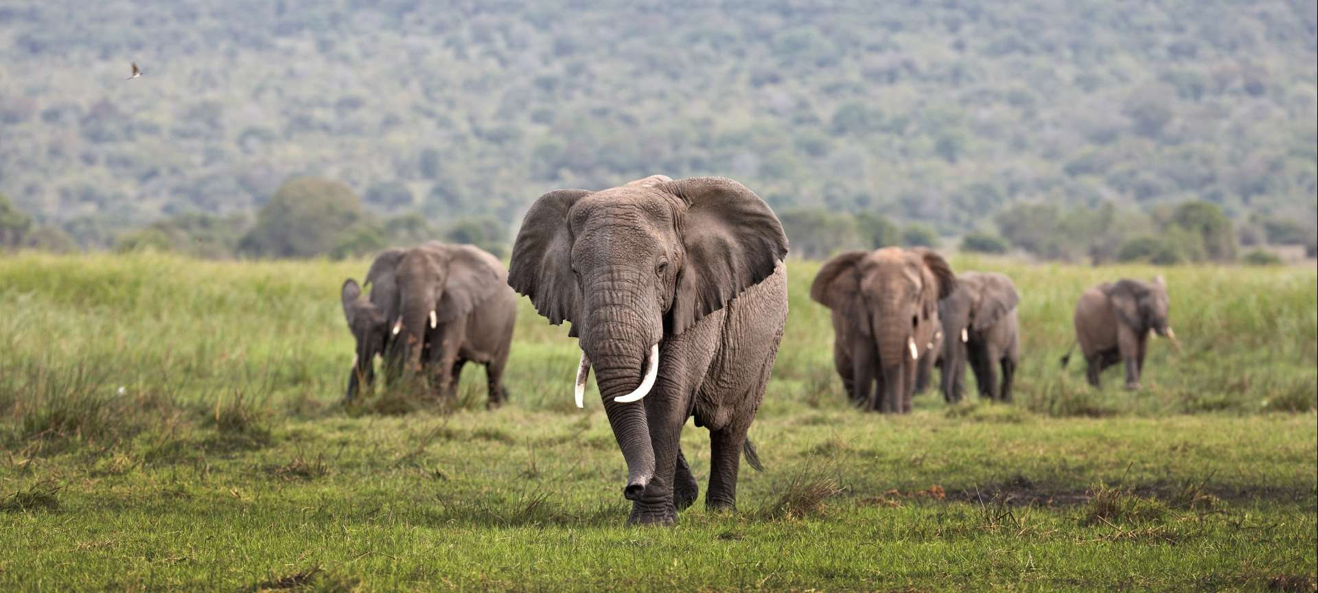 Rwanda - Africa Wildlife Safaris