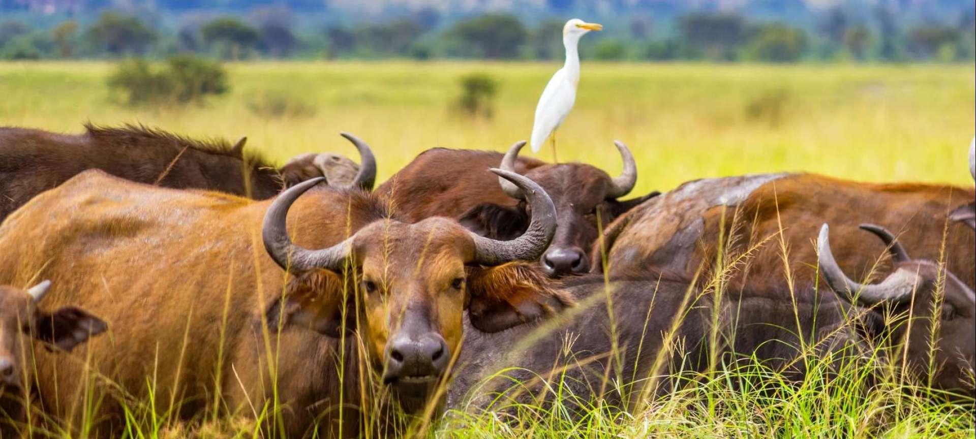 Ngorongoro Crater - Africa Wildlife Safaris