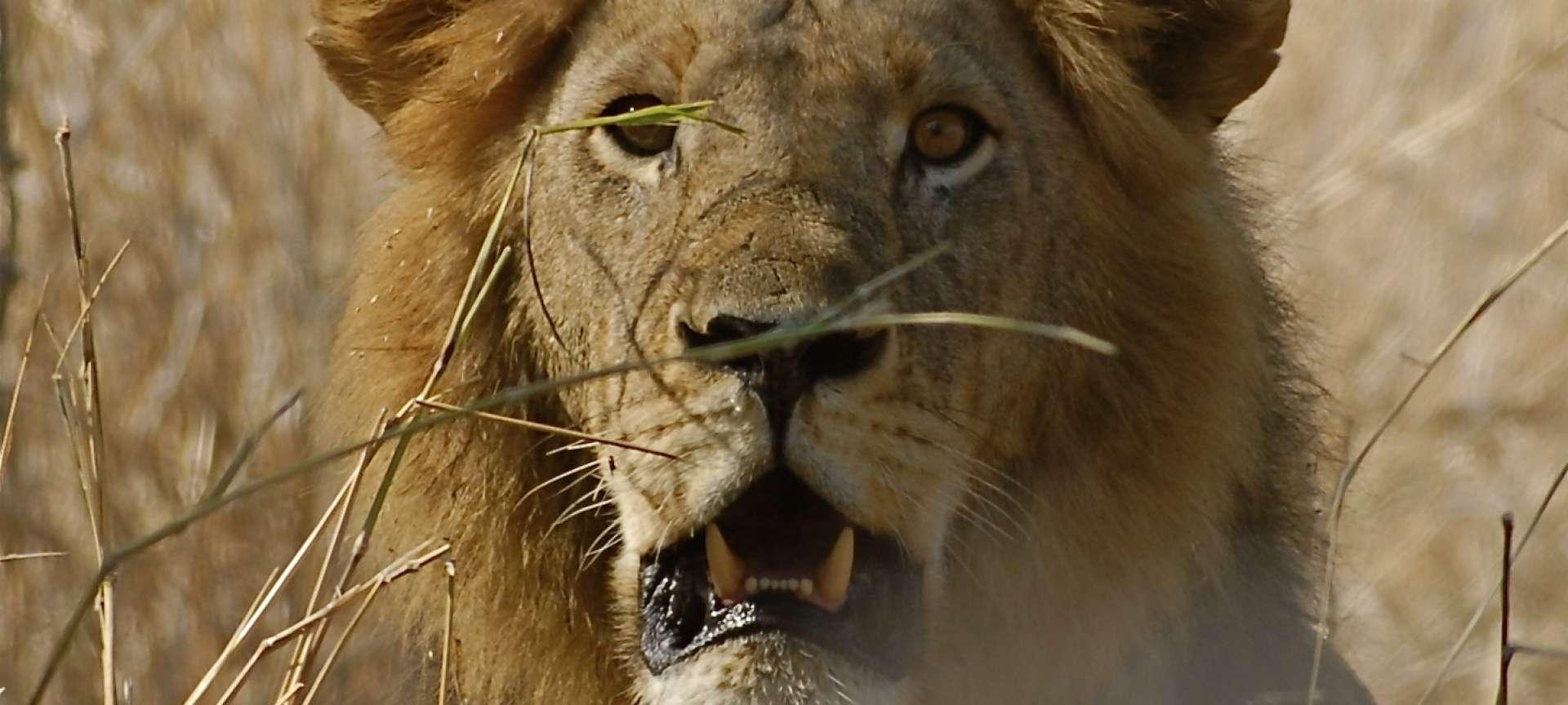 Ruaha National Park - Africa Wildlife Safaris
