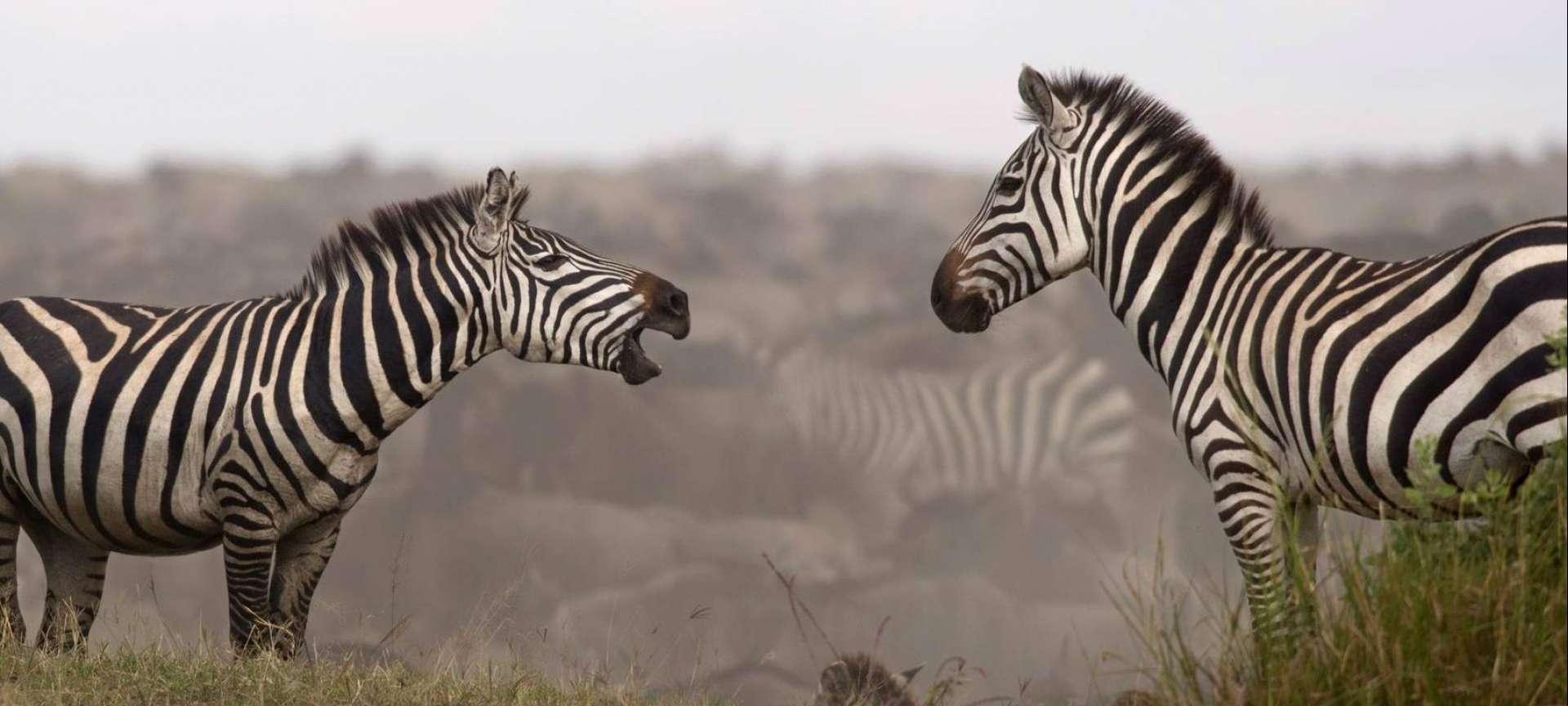 Tanzania Northern Circuit - Africa Wildlife Safaris