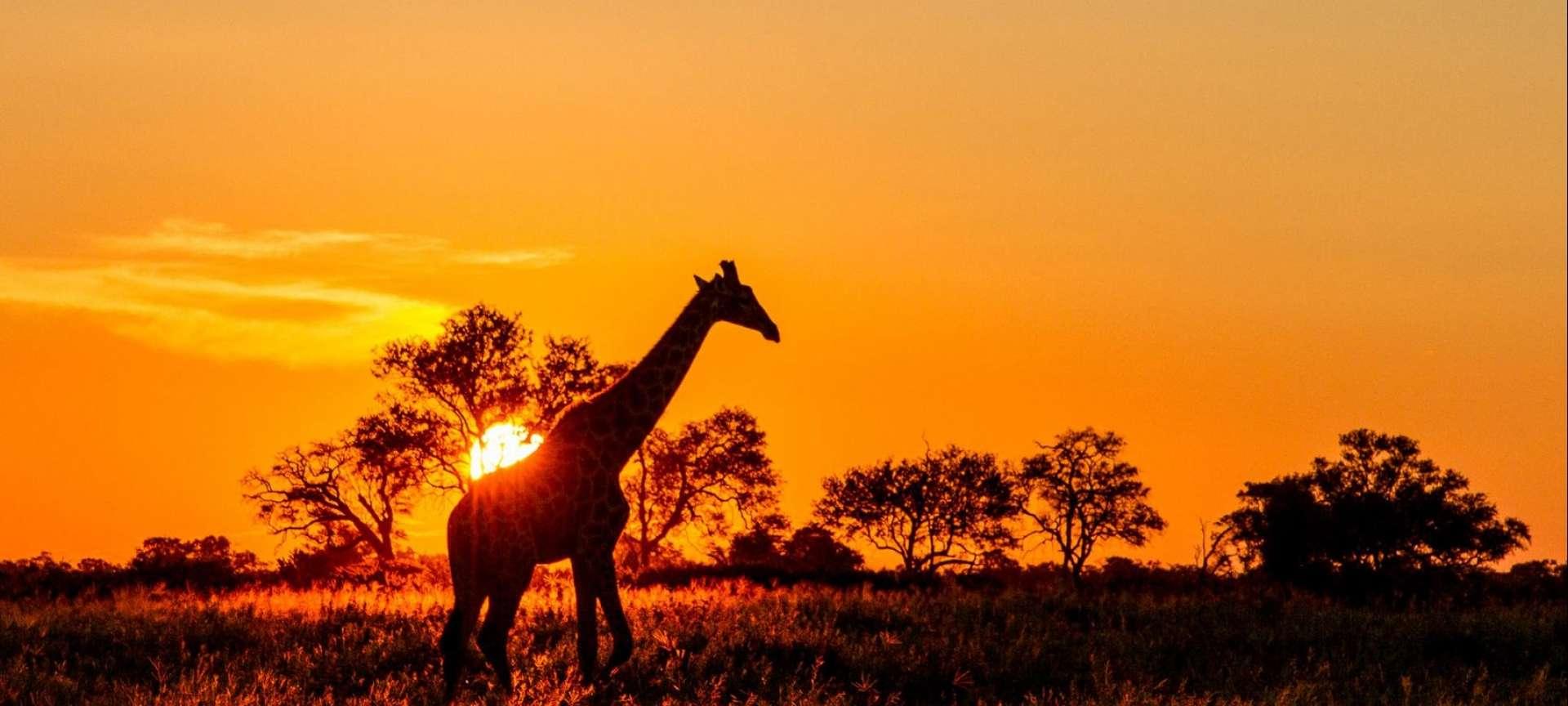 Tanzania Southern Circuit - Africa Wildlife Safaris