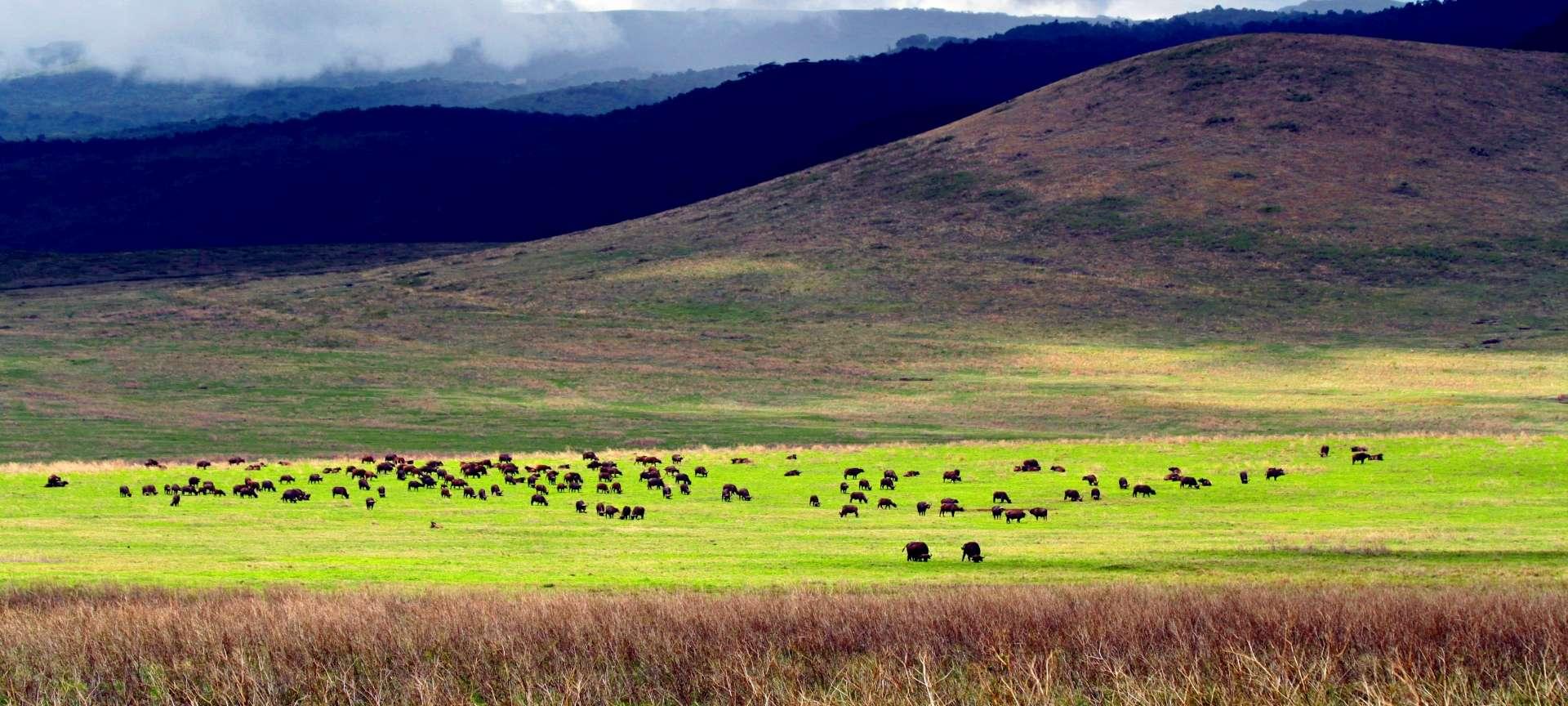 Tanzania Western Circuit - Africa Wildlife Safaris