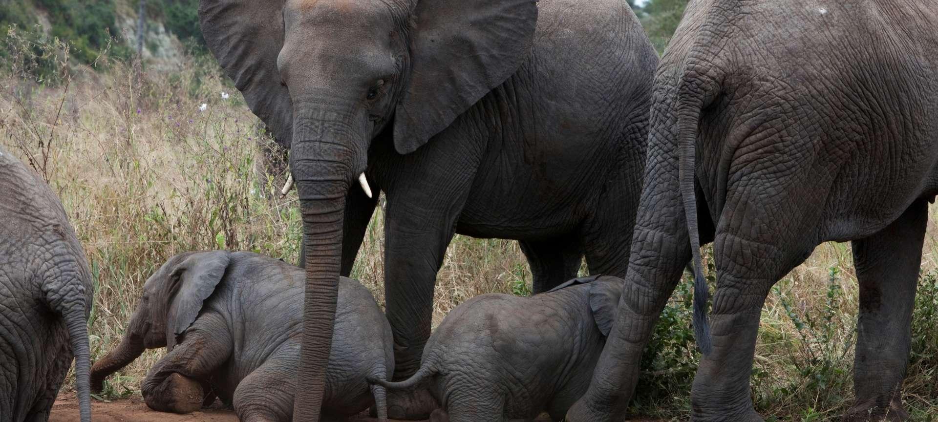 Tarangire National Park - Africa Wildlife Safaris