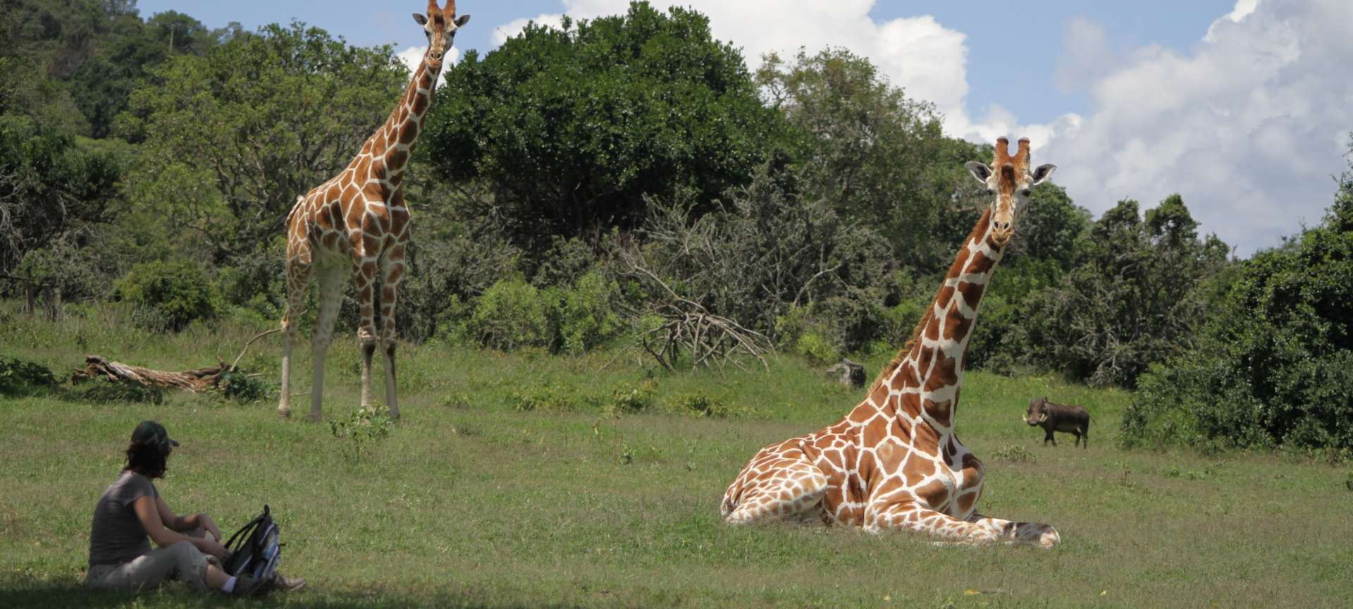 Aberdare National Park - Africa Wildlife Safaris