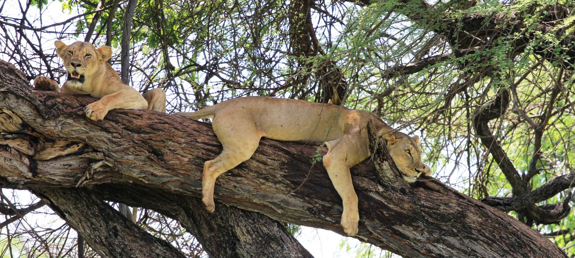Meru National Park - Africa Wildlife Safaris