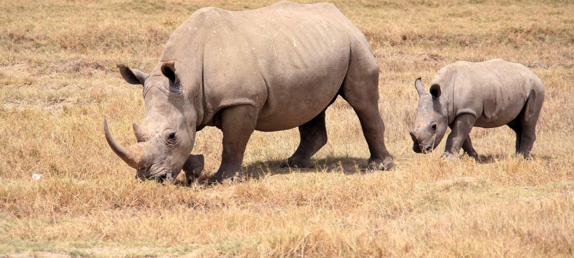 Nakuru - Africa Wildlife Safaris