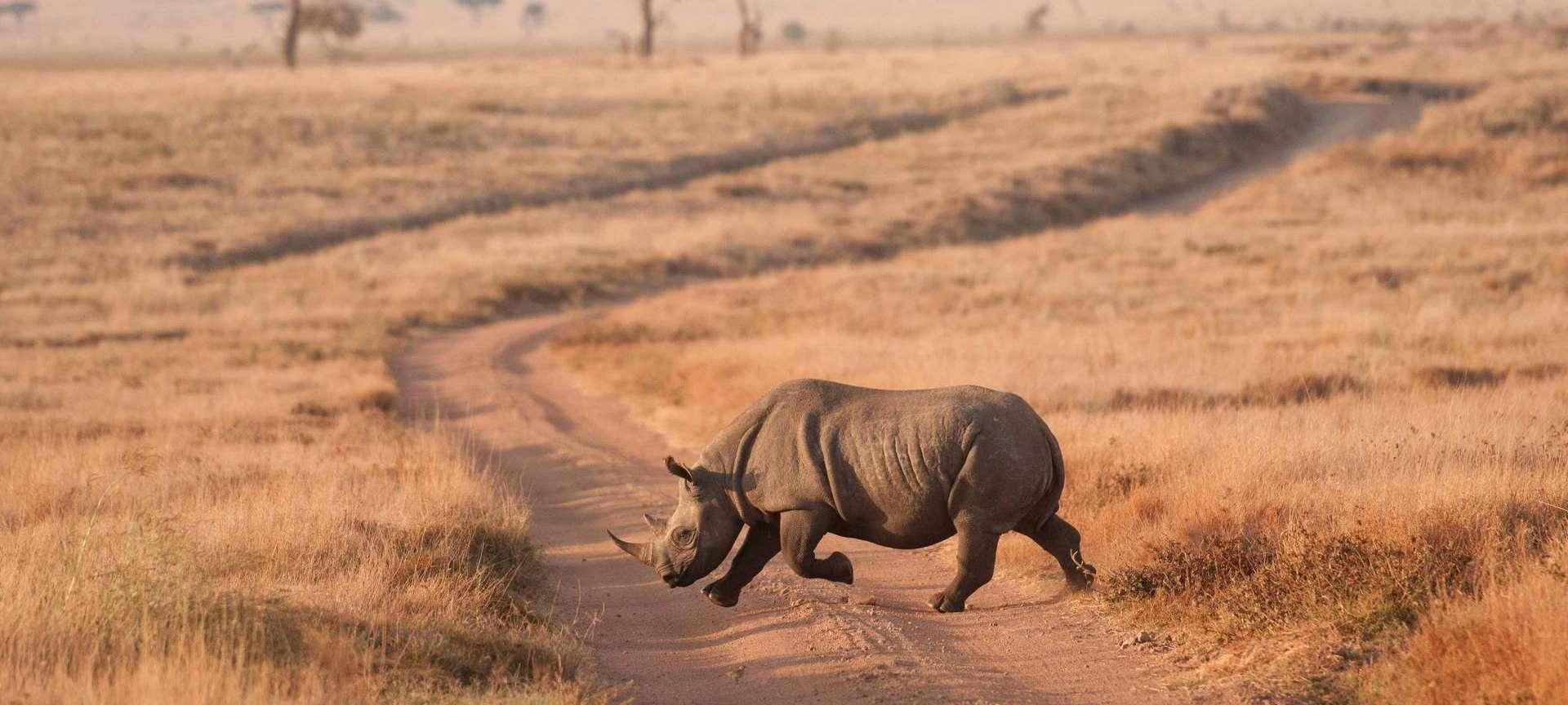 Samburu Buffalo Springs National Park - Africa Wildlife Safaris