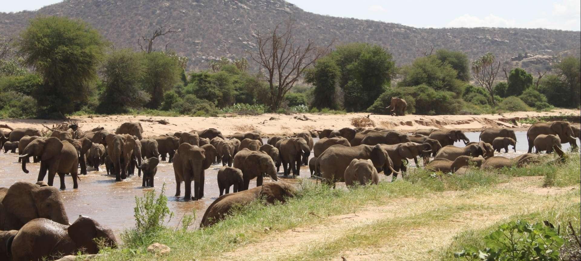 Samburu Buffalo Springs National Park Safaris, Tours And