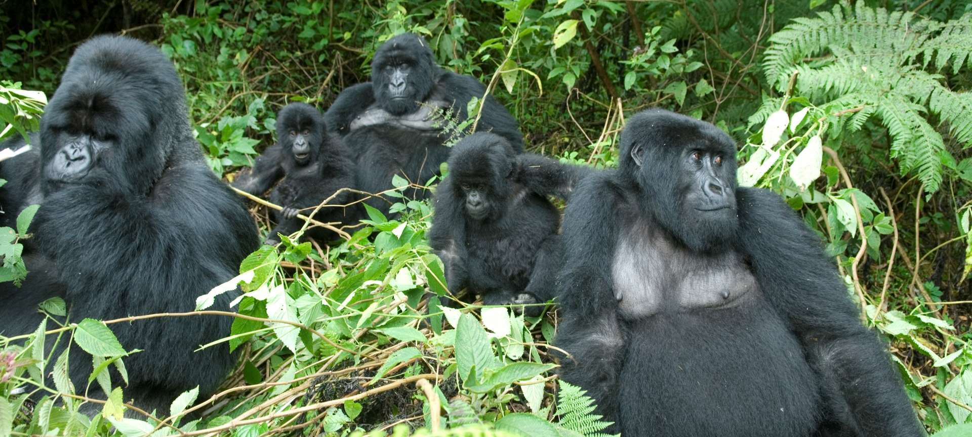 Volcanoes National Park - Africa Wildlife Safaris