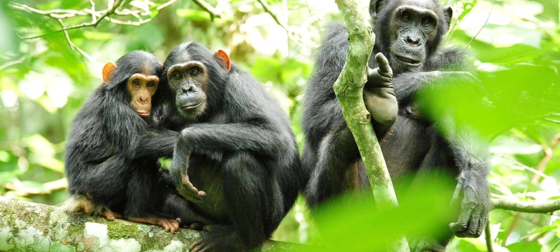 Kibale National Park - Africa Wildlife Safaris