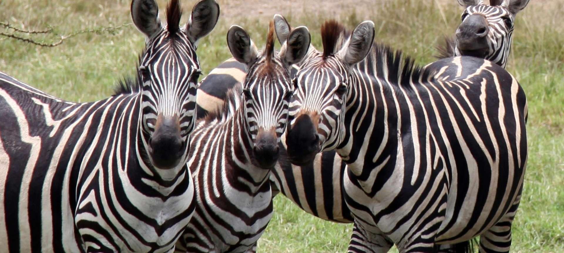Lake Mburo National Park - Africa Wildlife Safaris