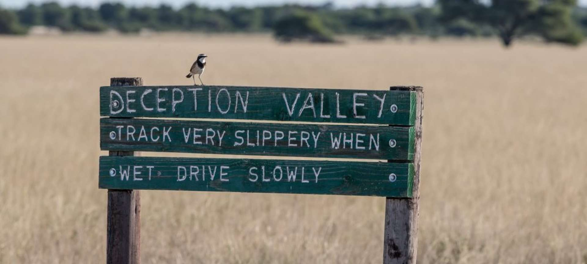 Deception Valley - Africa Wildlife Safaris