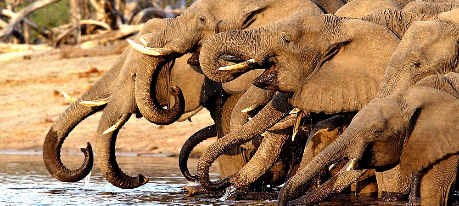 Linyanti Concession - Africa Wildlife Safaris
