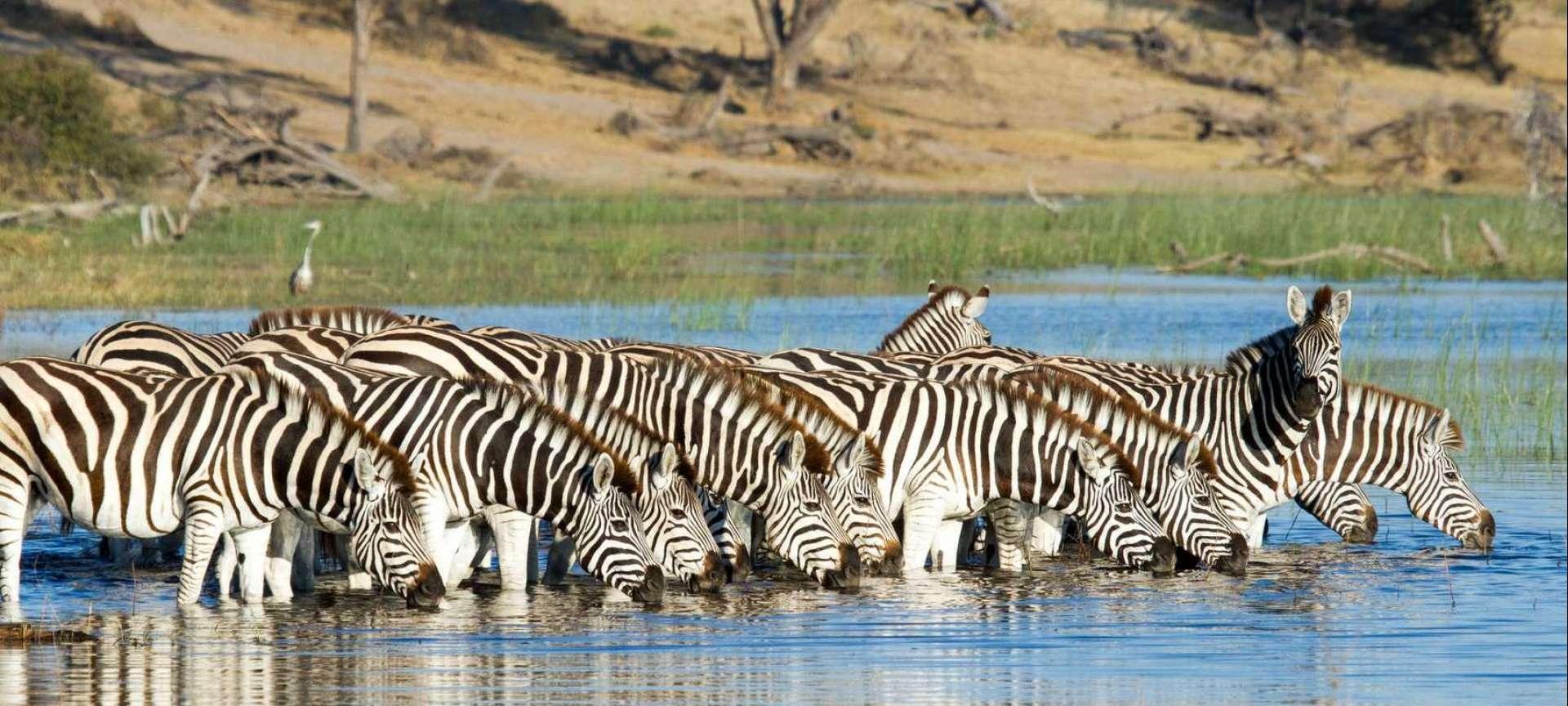 Makgadikgadi Pans - Africa Wildlife Safaris