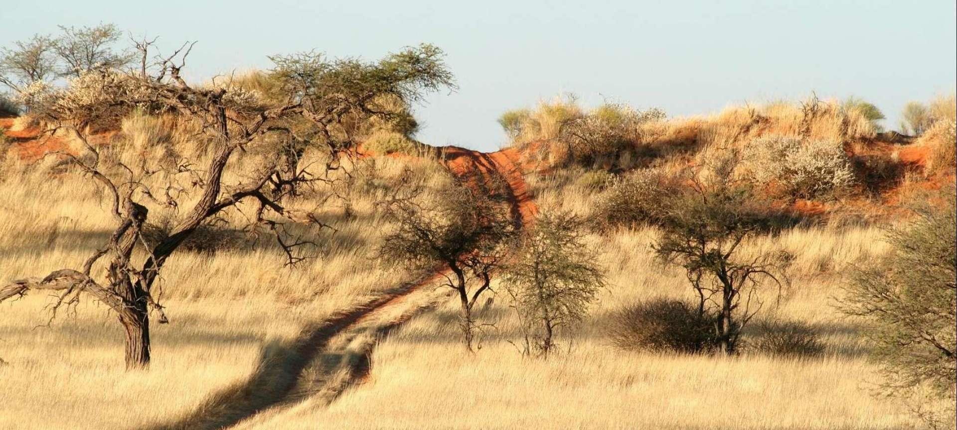 Kalahari Desert - Africa Wildlife Safaris