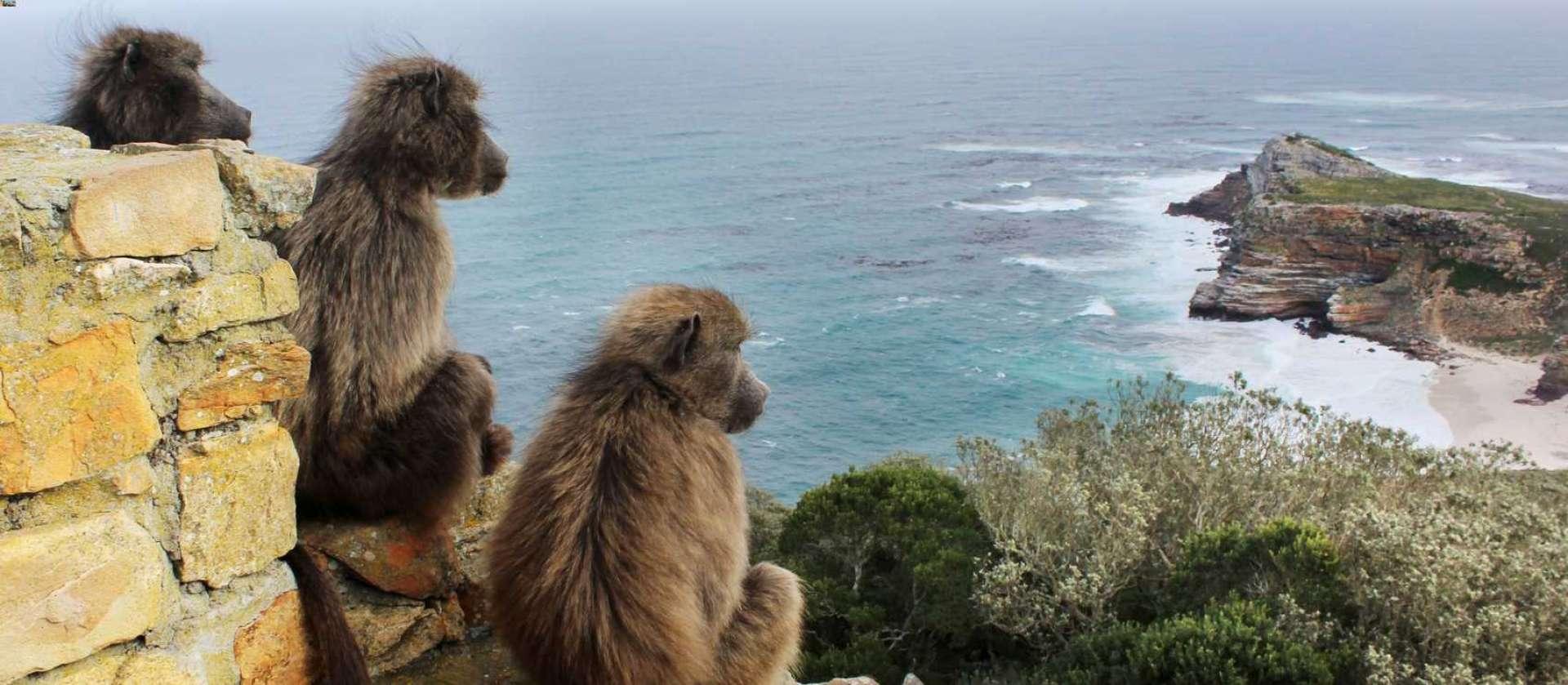 Cape Point - Africa Wildlife Safaris