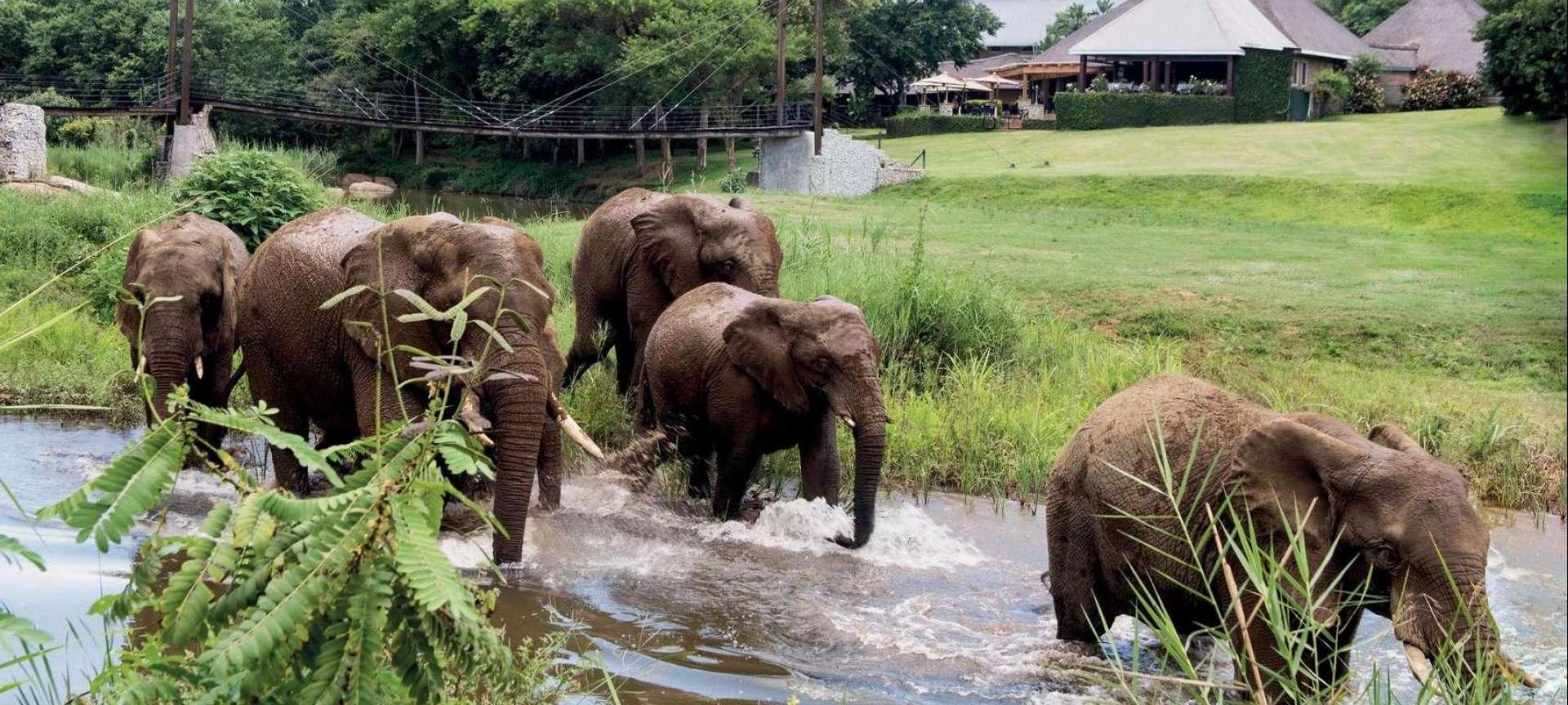 Kapama Private Game Reserve - Africa Wildlife Safaris