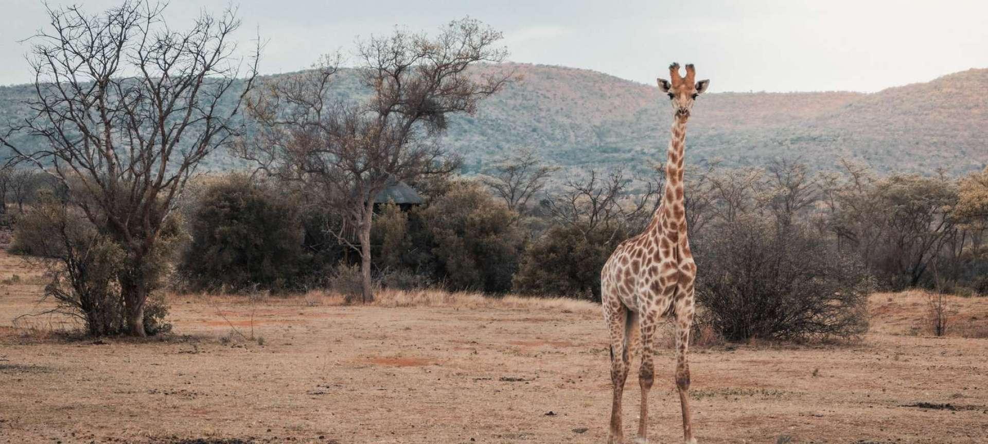 Limpopo - Africa Wildlife Safaris