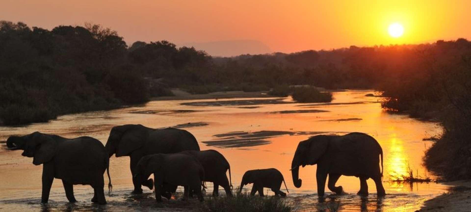 Mpumalanga - Africa Wildlife Safaris
