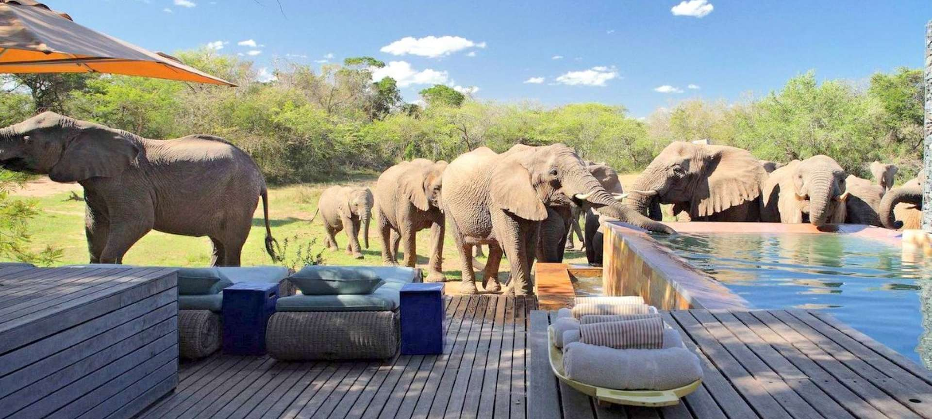 Phinda Game Reserve - Africa Wildlife Safaris