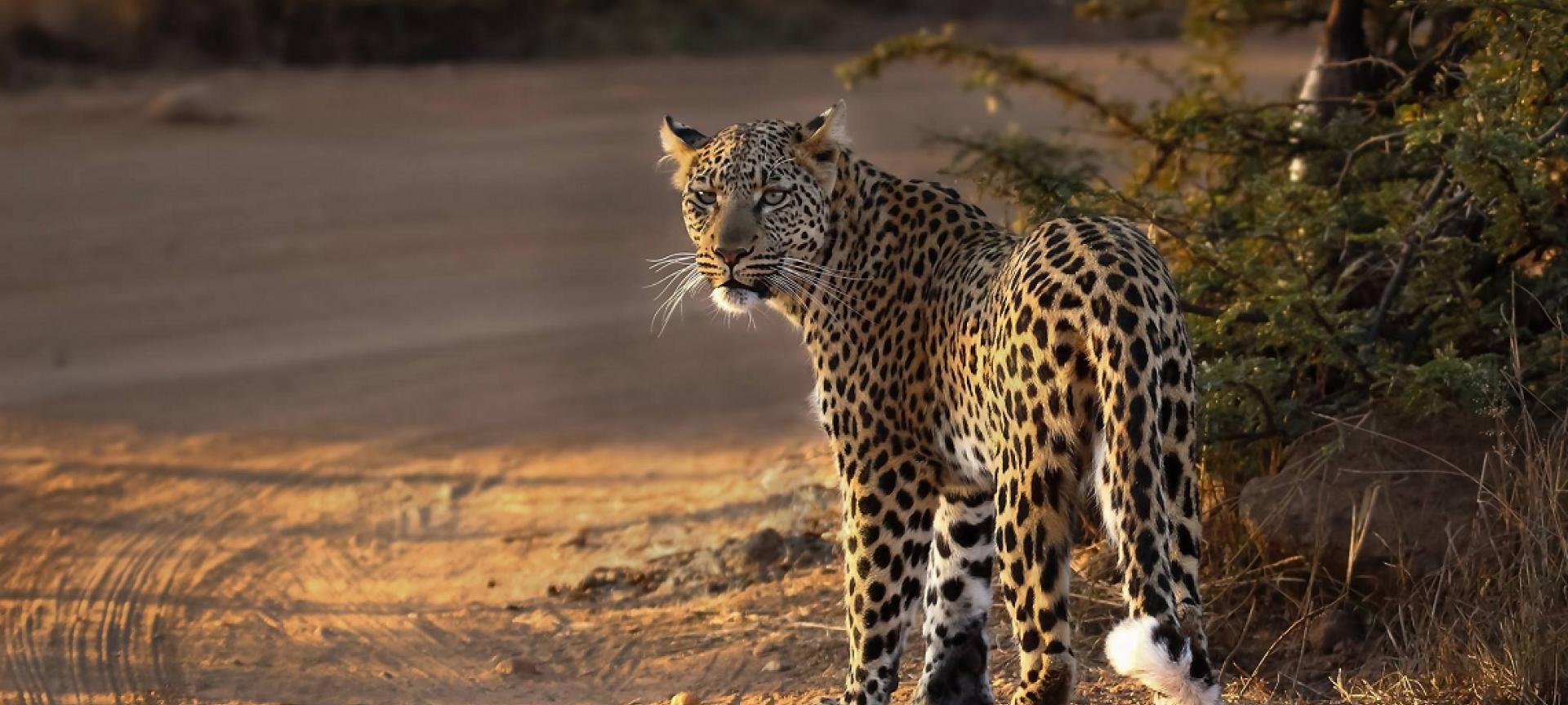 Pilanesberg National Park - Africa Wildlife Safaris