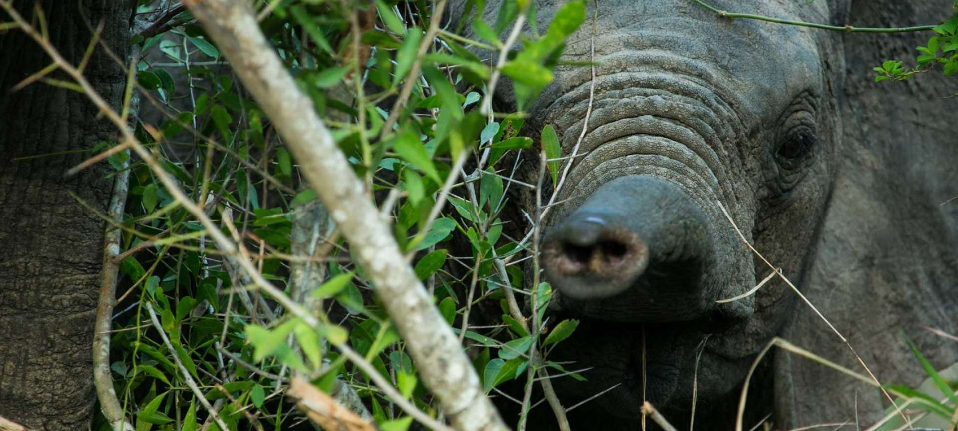 Sabi Sands Game Reserve - Africa Wildlife Safaris