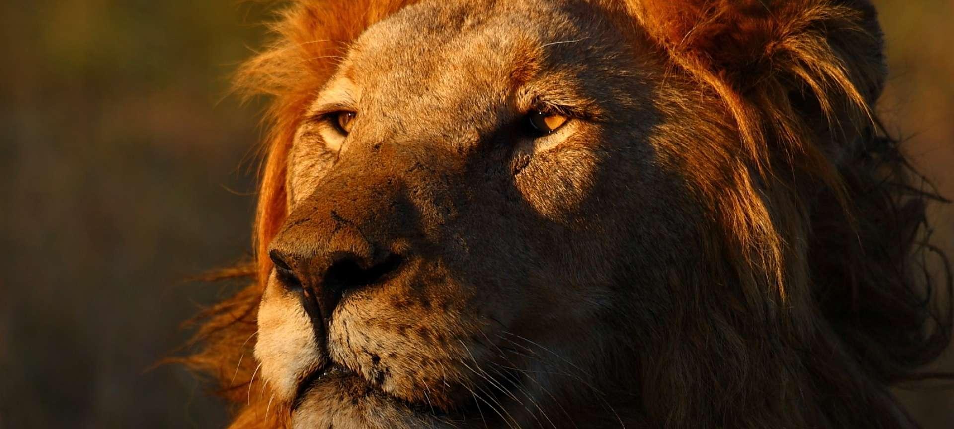 Thornybush Game Reserve - Africa Wildlife Safaris