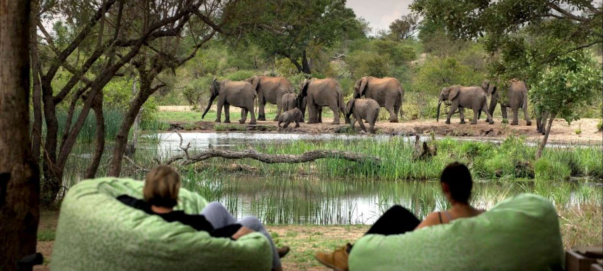 Timbavati Game Reserve - Africa Wildlife Safaris