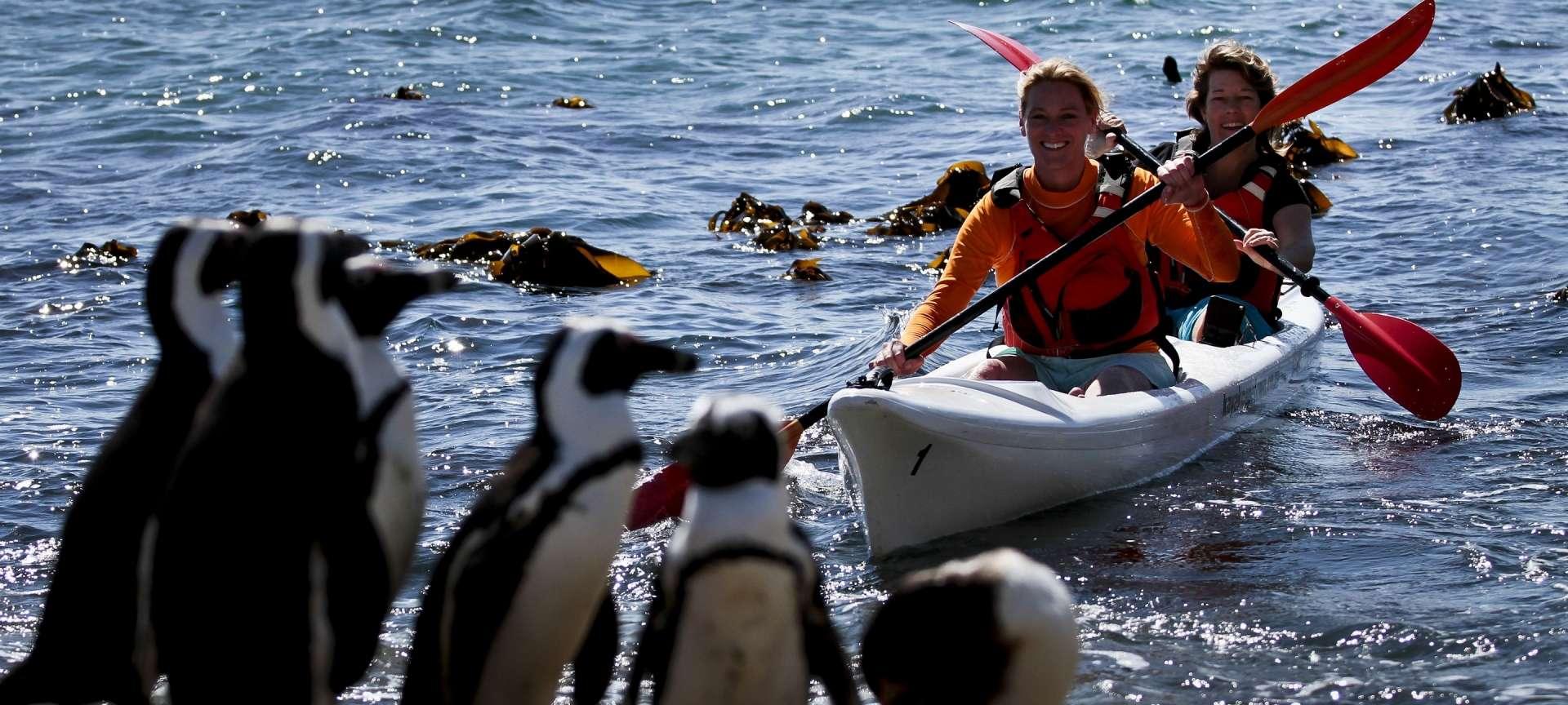 Western Cape - Africa Wildlife Safaris