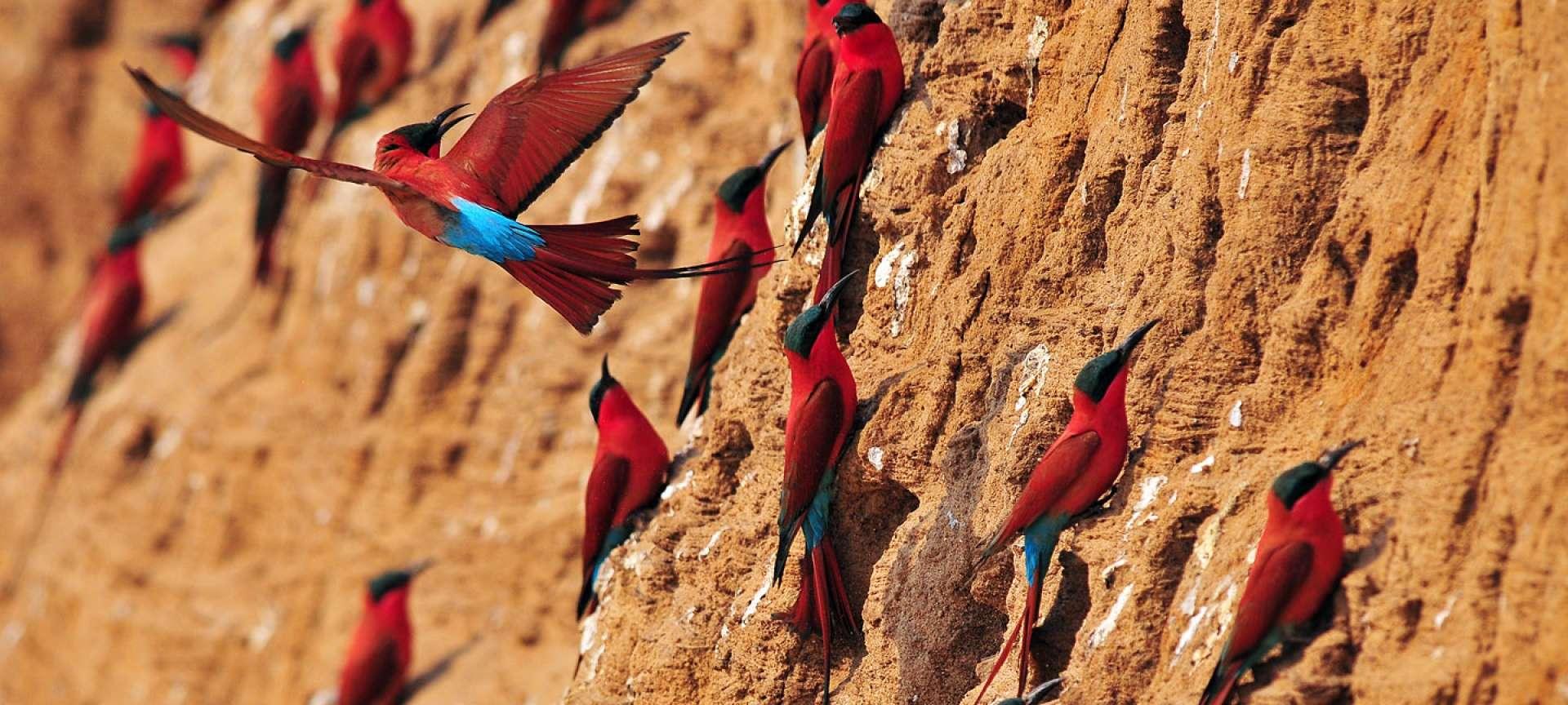 South Luangwa National Park - Africa Wildlife Safaris