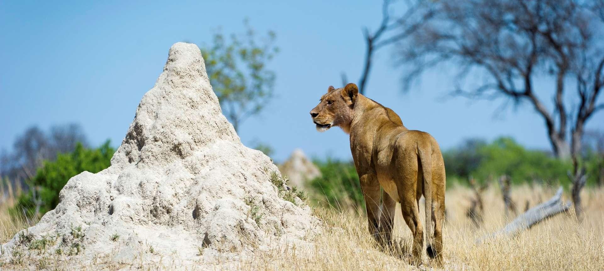 Hwange National Park - Africa Wildlife Safaris