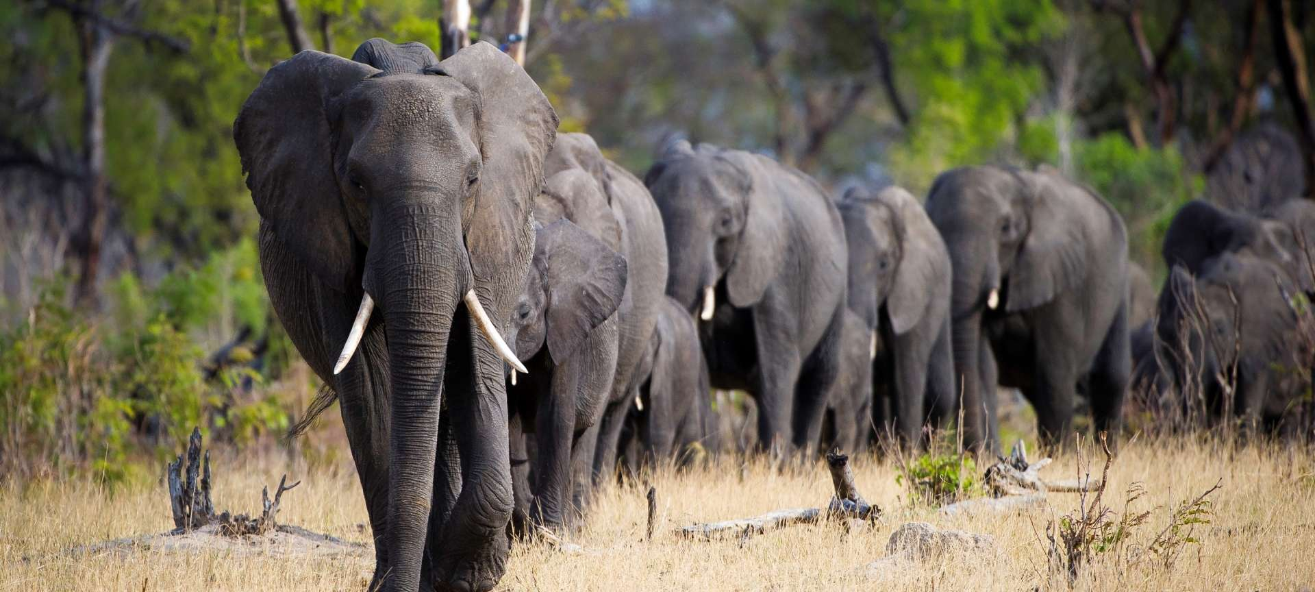 Hwange National Park - Africa Wildlife Safaris