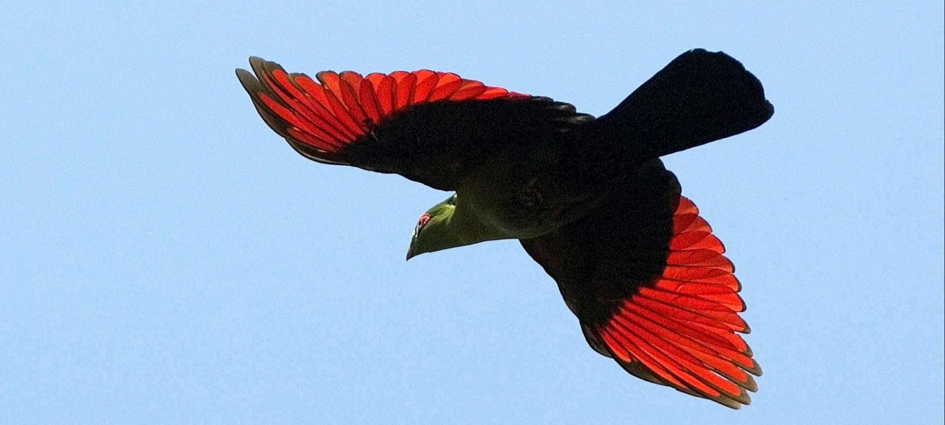 Victoria Falls - Africa Wildlife Safaris