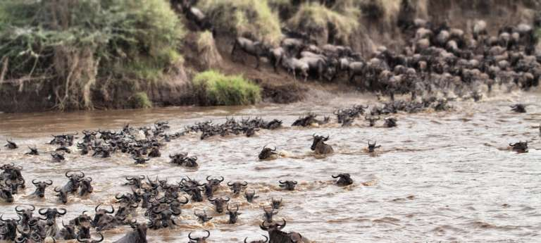 Africa's Great Wildebeest Migration - everything you need to