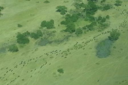 the-wildebeest-migration-is-moving-quick