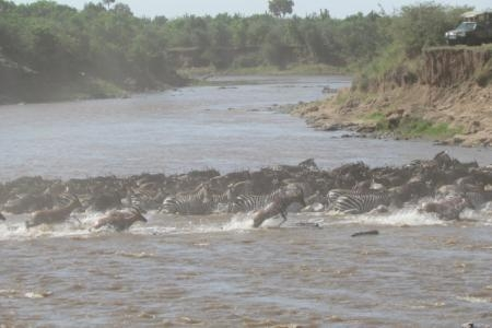 wildebeest-migration-mara-river-crossings-at-paradise-plains