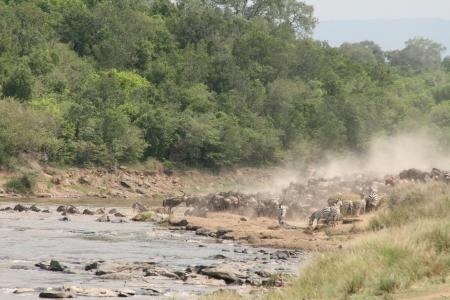 the-big-mara-river-crossings-have-continued