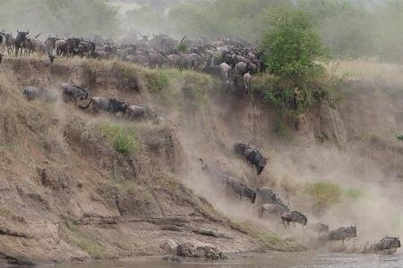 the-wildebeest-heading-into-the-mara-river-at-crossing-three-and-four