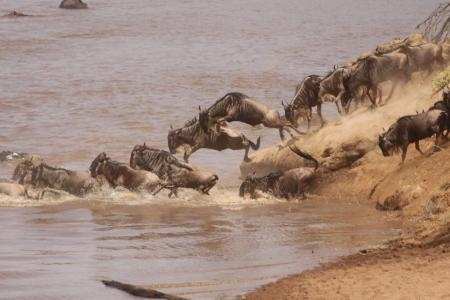 light-rain-triggered-this-mara-river-crossing-in-the-southern-mara