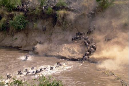 the-wildebeest-making-their-way-across-the-mara-river