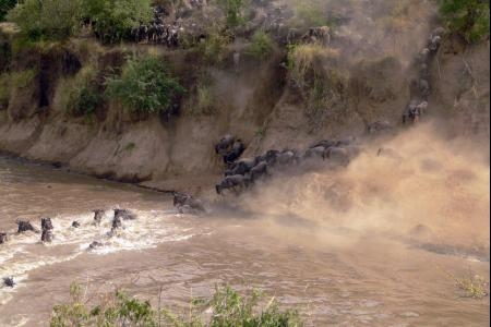 the-large-wildebeest-migration-river-crossing-at-the-mara-river