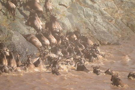 the-wildebeest-crossing-the-talek-river