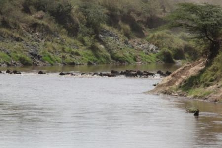 big-mara-river-crossing-yesterday