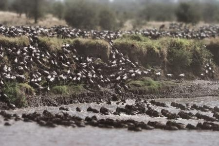 serengeti-migration-crossing-at-the-mara-river