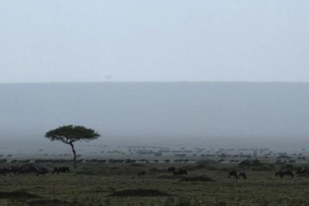 the-rain-gets-the-wildebeest-migration-going