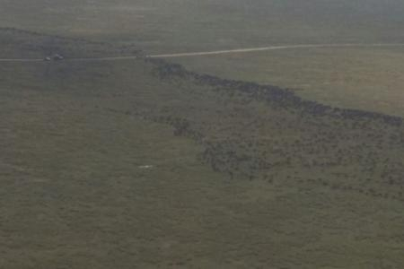 the-trailing-end-of-the-wildebeest-migration-is-at-kogatende-airstrip
