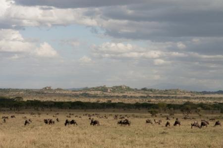 wildebeest-migration-close-to-elewana-serengeti-pioneer-camp