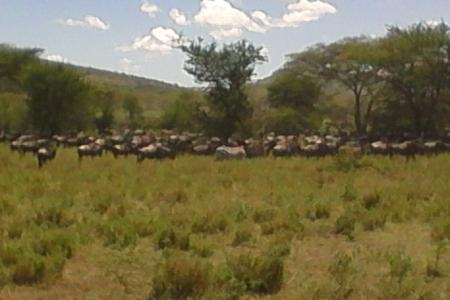 the-view-of-the-wildebeest-migration-from-dunia-camp