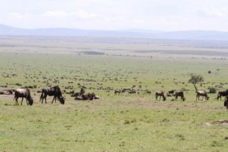 the-loita-migration-east-of-rhino-ridge